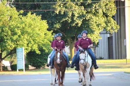 Mounted Division Riding Horses